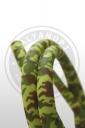 Силиконовый шланг AMY camouflage